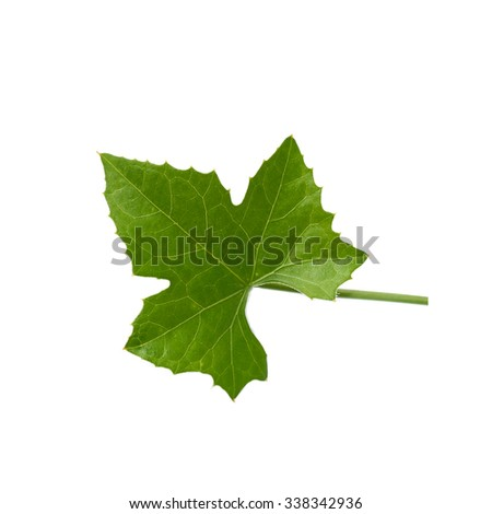 Green ivy leaf - stock photo