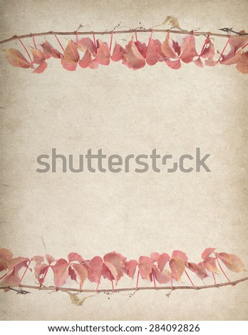 green ivy on old grunge antique paper texture - stock photo