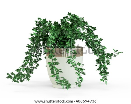 Green ivy potted in flowerpot isolated on white background. 3D Rendering, 3D Illustration. - stock photo