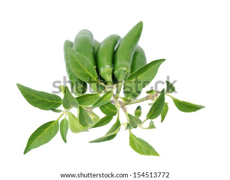 Green Jalapeno Peppers on white Background  - stock photo