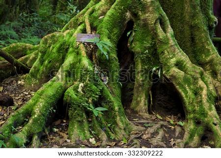 Green jungle,tree rain forest of ang ka trail in doi inthanon national park, Chiang Mai, Thailand - stock photo