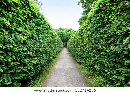 Hedges stock photo 201975061 shutterstock for Jardin laberinto