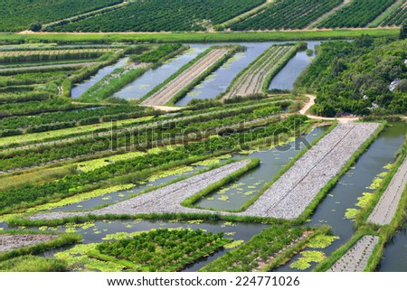 Green land used for agriculture surrounded by water in the Neretva delta, Croatia - stock photo