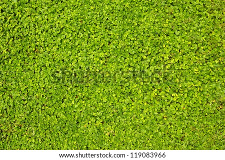 Green lawn close-up - stock photo