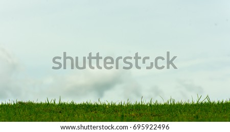 Green lawn for background. Green grass background texture. Worm's-eye view. selective focus.