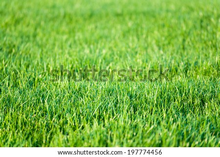 Green lawn grass background. Focus on front line. - stock photo