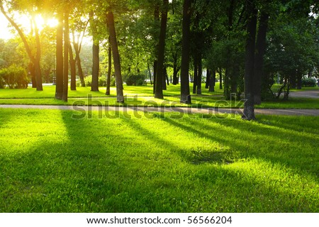 Green lawn in city park under sunny light - stock photo