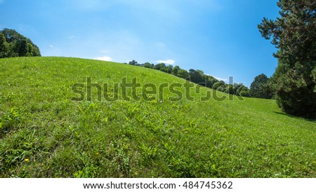 Green lawn with blue sky in park beautiful morning light in public park with green grass field and green fresh tree plant perspective to copy space for multipurpose