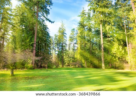 Green lawn with trees in park under sun light with rays - stock photo