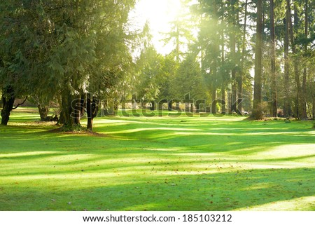 Green lawn with trees in park under sunny light - stock photo