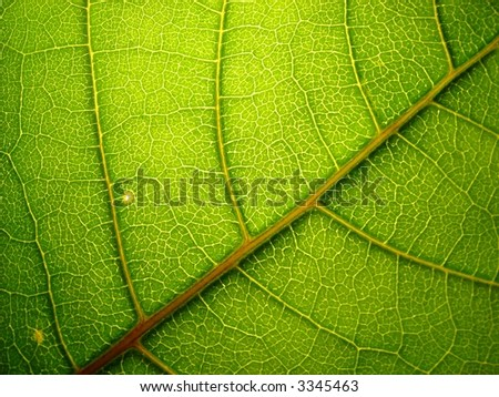 green_leaf_6 - stock photo