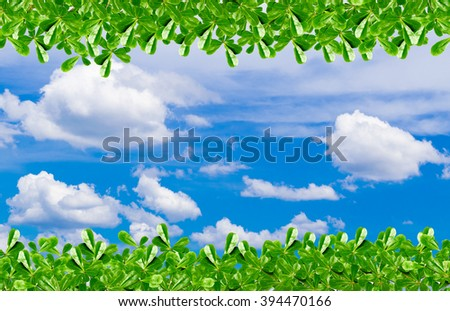 green leaf and beautiful blue sky with copy space - stock photo