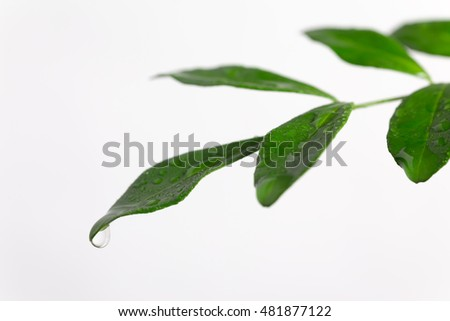 Green leaf and drop Eco image