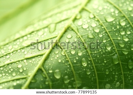 Green leaf and droplets - stock photo