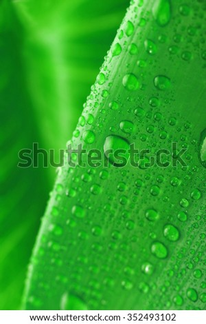 green leaf and water drop close up - stock photo
