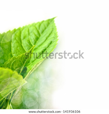 green leaf and white light - stock photo