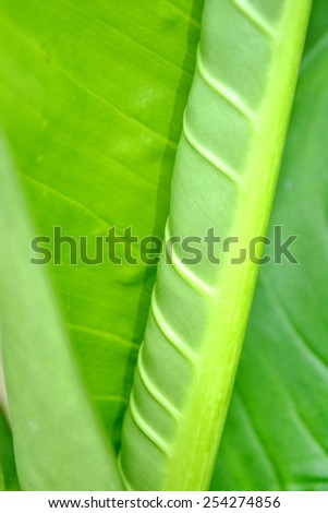 green leaf as background  texture of a green leaf as background - stock photo