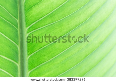 Green leaf background - stock photo
