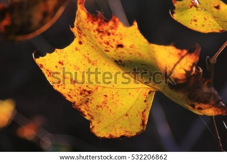 Green Leaf Background - Colors in Nature -