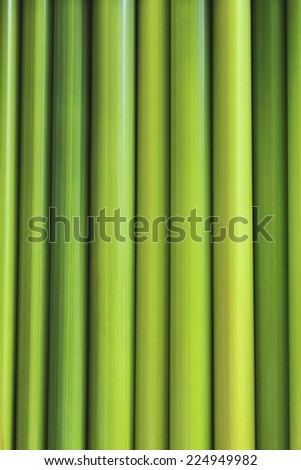 green leaf background of sedge
