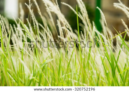 Green leaf background texture, Close-up - stock photo