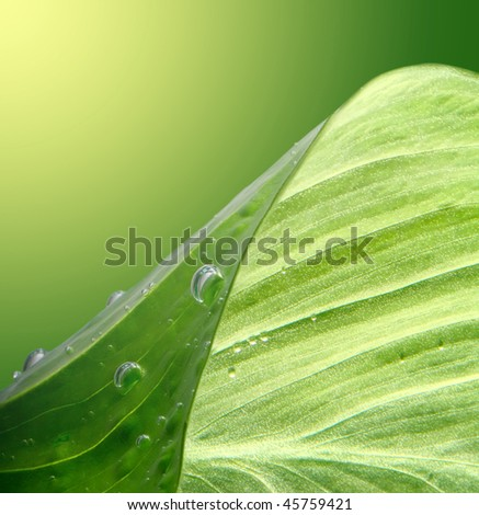 green leaf background with water drops - stock photo