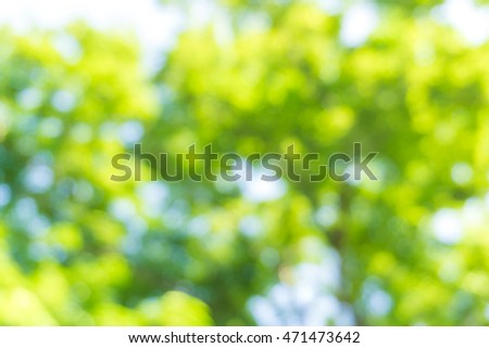 Green leaf blurred background in natural spring green and blue colors, the bokeh effect