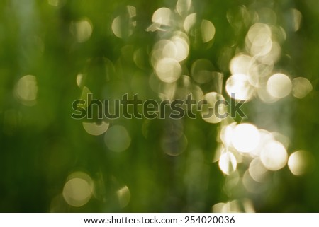 Green leaf blurred reflecting in  water, close up. - stock photo