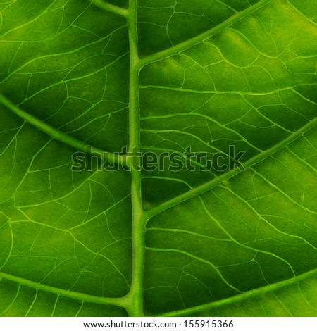 Green leaf close-up as natural background - stock photo