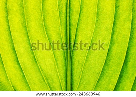 Green leaf close-up background. Macro - stock photo