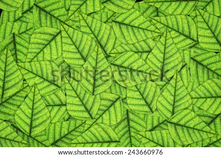 Green leaf close-up background. Macro - stock photo
