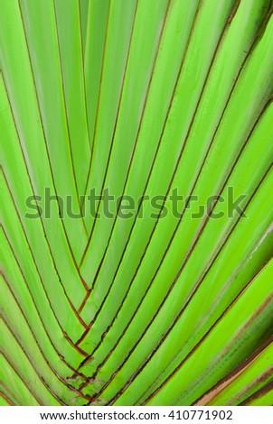 Green leaf detail. Hard leaf of a tropical flower - stock photo