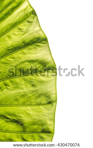Green leaf detail isolated on white background