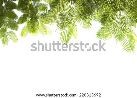 Green Leaf for Background - stock photo