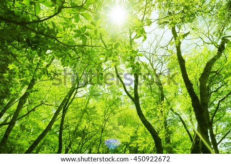green leaf forest