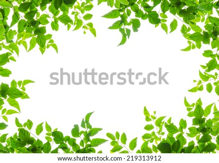 green leaf frame isolated on white background - stock photo