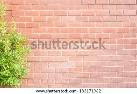 Green leaf frame on an old brick wall - stock photo