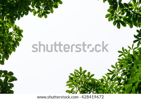 Green leaf frame with isolated copy space