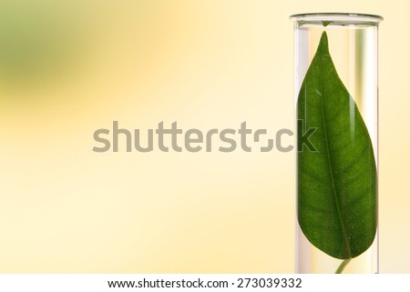 Green leaf in test tube on light blurred background - stock photo