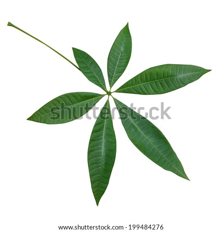 Green leaf isolated and white background