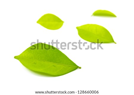 Green leaf isolated on white background with shadow - stock photo