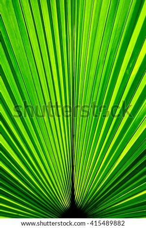 Green leaf, Line of palm leaf, Green background - stock photo