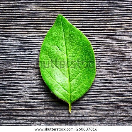 Green leaf lying on black wooden board. Natural and organic eco-friendly concept. Top view. - stock photo