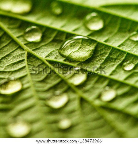 Green leaf macro with water drops close up - stock photo