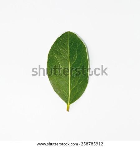 green leaf minimalism selective focus - stock photo