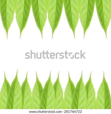 green leaf naturally isolated on white - stock photo