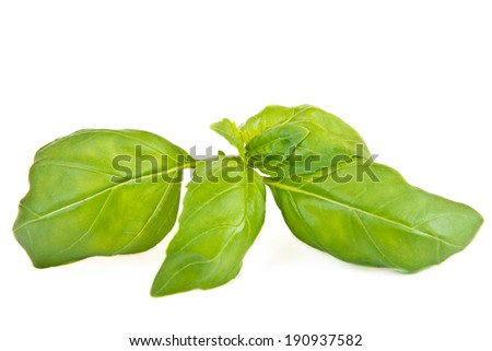 green leaf of basil on white background