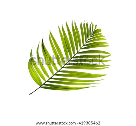 Green leaf of palm tree background - stock photo
