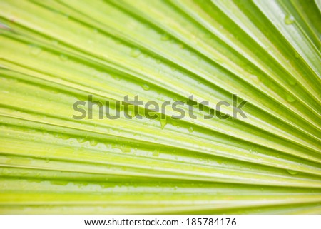 Green leaf of palm tree closeup. nature - stock photo