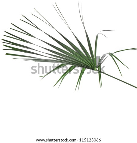 Green leaf of palm tree isolated on white background - stock photo